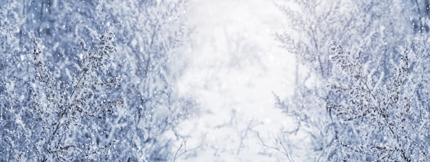 冬の背景、冬のパターンを形成する雪に覆われた植物とクリスマスの背景