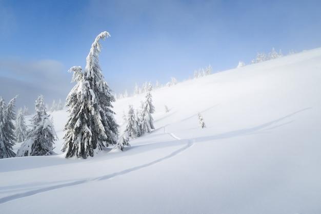 コピースペースと冬の背景。山の森の雪の天気。雪の中のトウヒと歩道