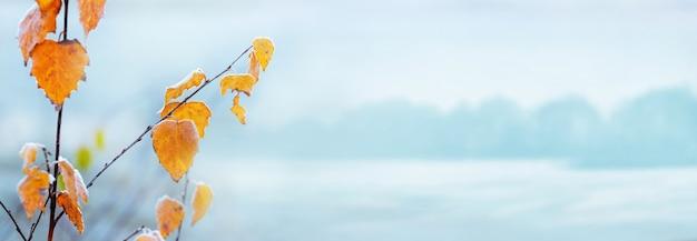 Зимний фон с покрытыми инеем березовыми листьями на размытом фоне, копией пространства, панорама