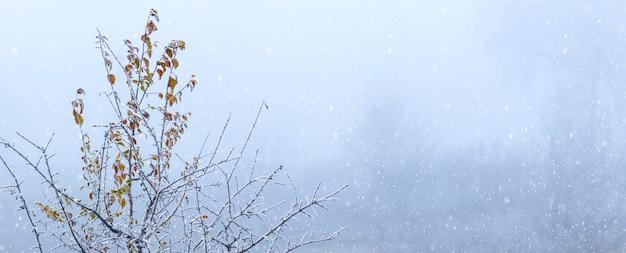 降雪時に乾燥した葉を持つ雪に覆われた木の枝、コピースペースと冬の背景