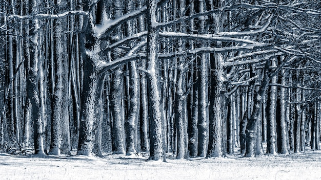 Winter background with snow-covered trees in the forest