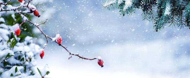 降雪時の森のトウヒと犬バラの枝と冬の背景
