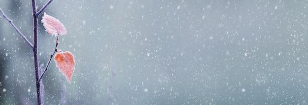 Зимний фон с засохшими листьями на ветке и снегопадом на размытом фоне, свободное место для текста и логотипа или изображения, баннер, панорама