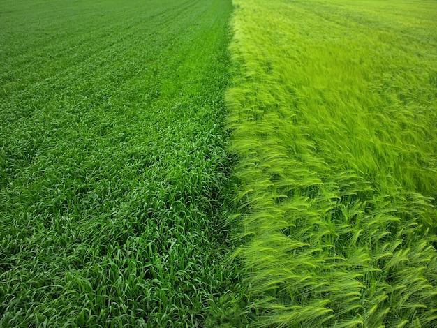 冬の大麦畑、さまざまな穀物の分割プロット