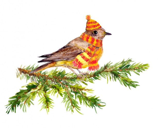 Winter bird and scarf on pine tree branch.