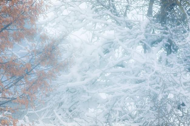 겨울 디자인에 대 한 배경을 흐리게. 눈보라 동안 나무_
