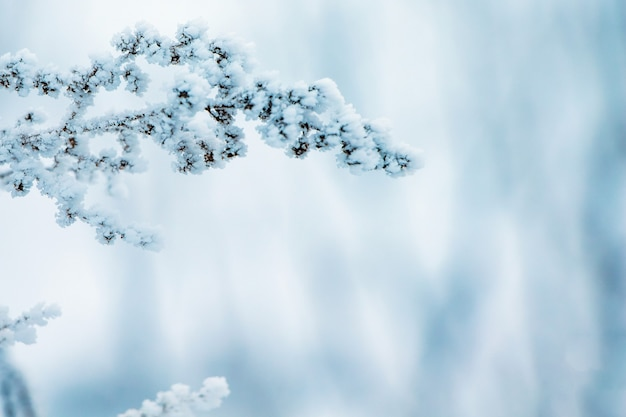 Winter, a branch of a dry plant covered with hoarfrost, to the right free place, a symbol of persistence and endurance_