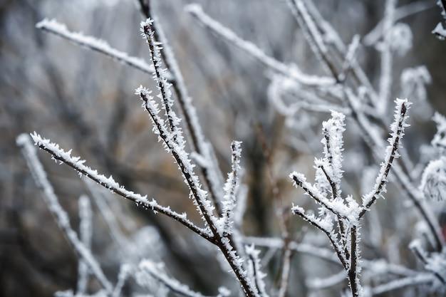 背景の雪の霧氷の木の冬の枝
