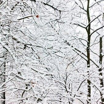Зимние ветки деревьев в снегу