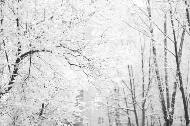 Winter.brown裸の木の幹、霜で覆われた巻き毛の美しい長い枝がたくさん