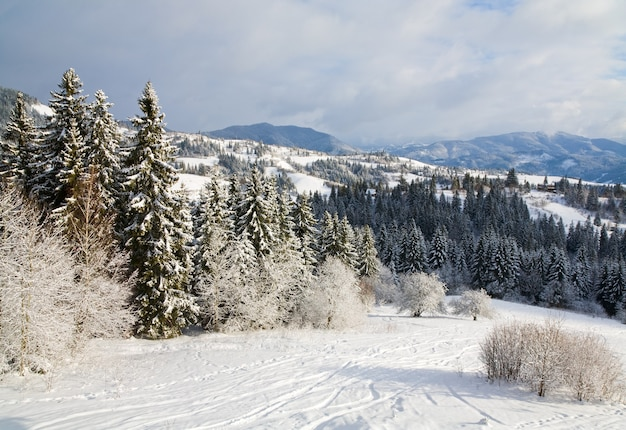 Зимний спокойный горный пейзаж с инеем и заснеженными елями и горнолыжным спуском