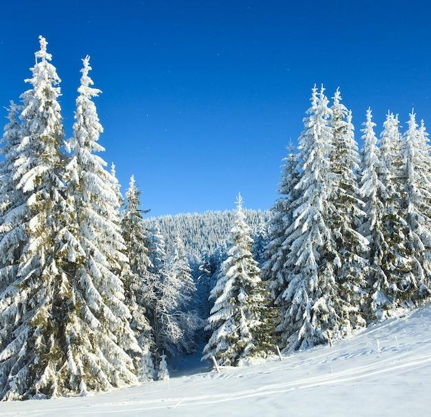 Зимний спокойный горный пейзаж с инеем и заснеженными елями и снегопадом