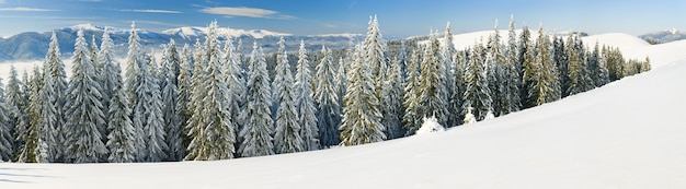 Зимний спокойный горный пейзаж с инеем и заснеженными елями. с заснеженной копией в правом нижнем углу. восемь кадров сшивают изображение.