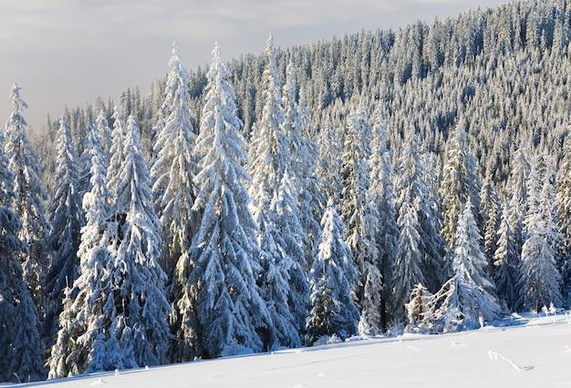 Зимний спокойный горный пейзаж с инеем и заснеженными елями Premium Фотографии