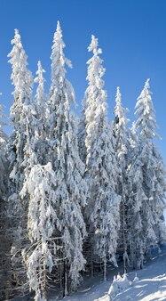 霜と雪に覆われたトウヒの木と冬の穏やかな山の風景