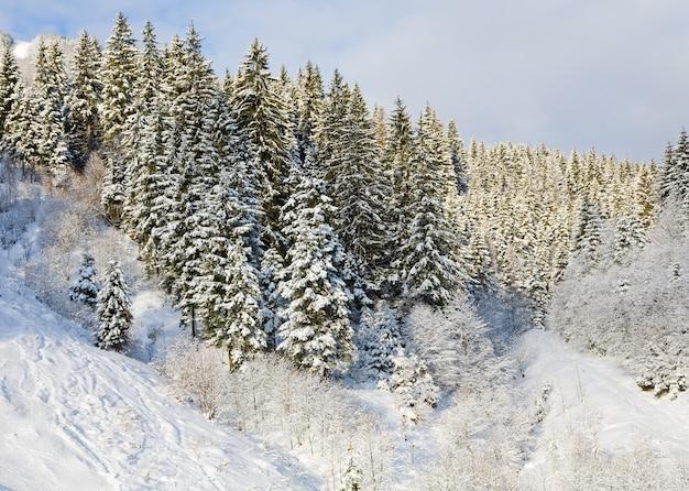Зимний спокойный горный пейзаж с заснеженными елями
