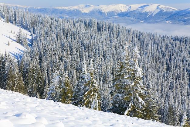 Зимний спокойный горный пейзаж со заснеженными вершинами овощей на переднем плане (вид с горнолыжного курорта буковель (украина) на свидовецкий хребет)