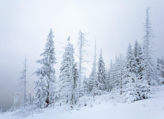 Зимний спокойный горный пейзаж со снегопадом и красивыми елями на склоне (гора куколь, карпаты, украина)