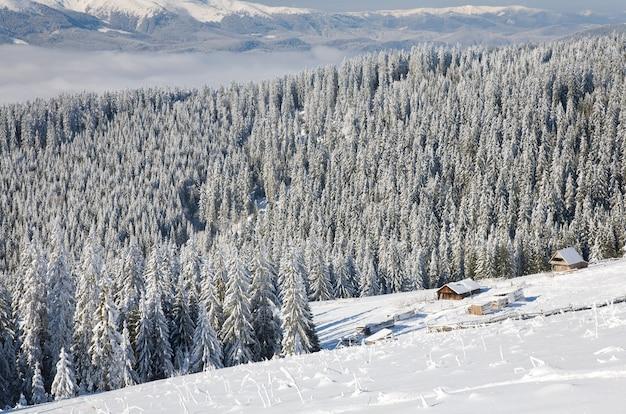 Зимний спокойный горный пейзаж с заснеженными стеблями спереди и группой навесов позади (вид с горнолыжного курорта буковель (украина) на свидовецкий хребет)