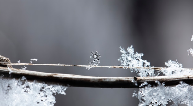 Winter card, crystals of snow, winter photo