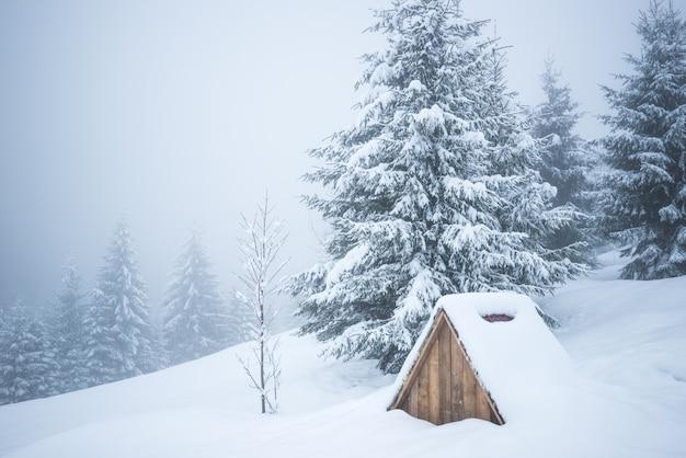 冬のカルパティア風景、雪の中でクリスマスツリー。