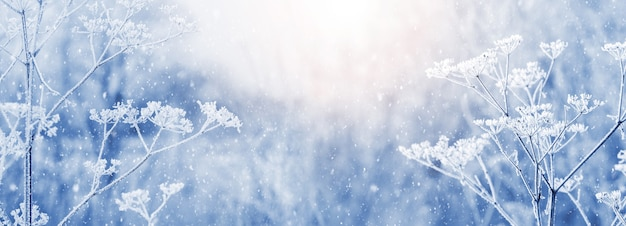 눈이 내리는 동안 아침에 서리에 덮인 마른 식물이 있는 겨울 크리스마스와 새해 배경