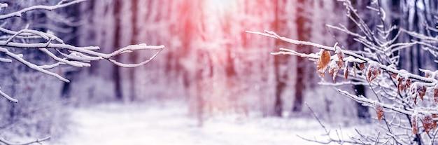 日の出の間に雪に覆われた木の枝と冬のクリスマスと新年の背景、雪に覆われた木と冬の風景