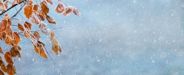 降雪、パノラマ、コピースペースの間にぼやけた背景に木の枝に乾燥した葉を持つ冬のクリスマスの背景