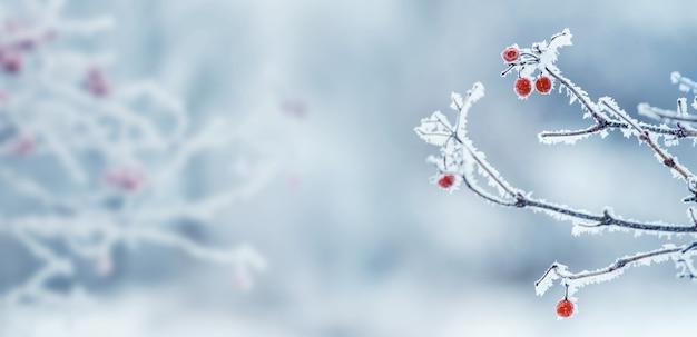 Зимний новогодний фон с красными ягодами калины на голубом фоне, копией пространства