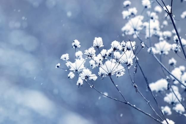 雪に覆われた乾燥した植物の茎と冬のクリスマスの背景