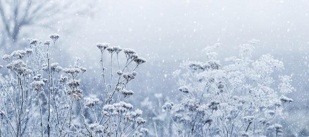 降雪時に雪に覆われた植生と冬のクリスマスの背景