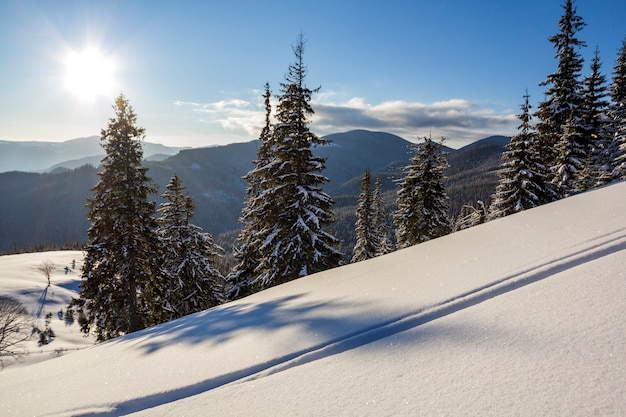 Winter christmas landscape of mountain valley on frosty sunny day. covered with frost tall fir-trees in deep snow, woody dark mountain ridge, soft glow on horizon, blue sky