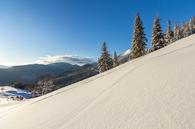 Winter christmas landscape of mountain valley on frosty sunny day. covered with frost tall fir-trees in deep snow, woody dark mountain
