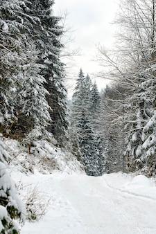 오후에 겨울 침 엽 수 눈 덮인 숲입니다. 수직 프레임.
