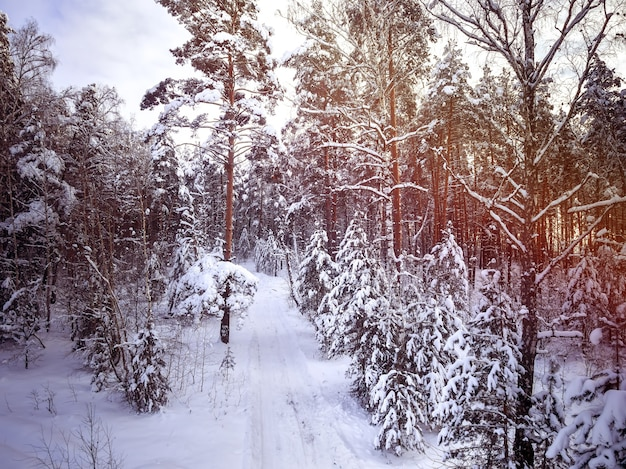 森の中の冬の田舎道。雪の中の木。曇り空