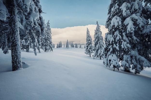 숲의 겨울 날, 모든 나무가 하얀 눈으로 덮여