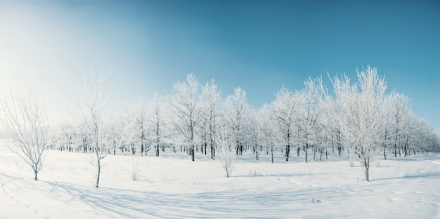 Winter day with blue sky in woodland, all trees covered with white snow