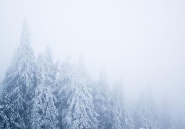 겨울날 높은 모피 나무와 흰 연기가 있는 겨울 깊은 숲. 겨울 원더랜드 자연 개념의 풍경
