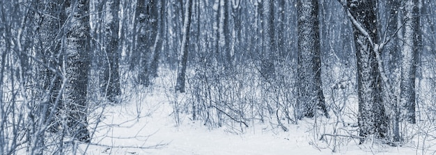 Зимний густой лес во время снегопада, зимний пейзаж с деревьями в лесу