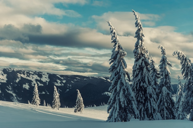 Winter evening in mountains, all trees covered with white snow