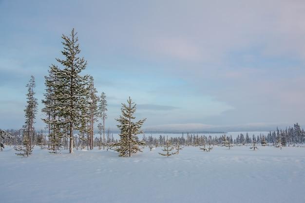 겨울 저녁. 얼어 붙은 호수 기슭의 희귀 한 눈 덮인 전나무