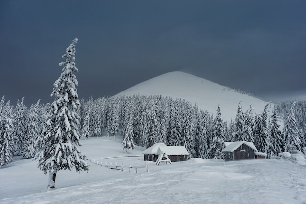 Winter evening in wood on mountains, all trees covered with white snow