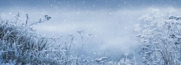 降雪時の霜に覆われた植物と冬のおとぎ話の背景。雪の背景