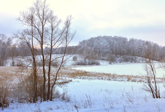 朝の冬の畑。雪の漂流の中の裸の木、地平線上の森