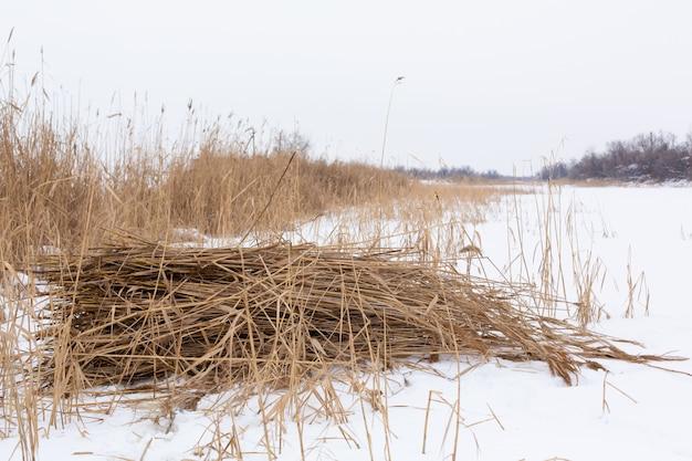 冬、白い雪で覆われた乾いた草のフィールド