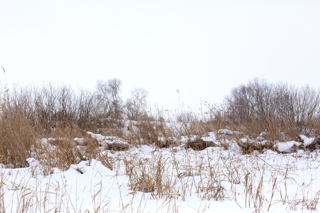 Winter, field with dry grass covered with white snow