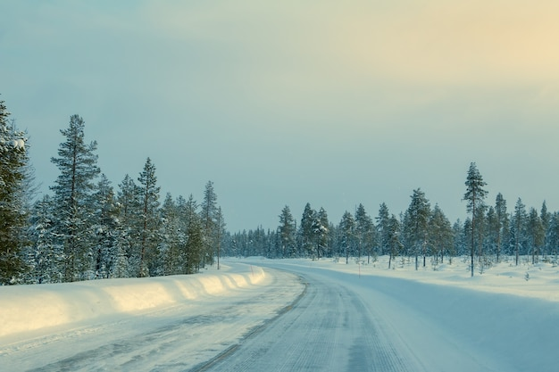 Winter finland. rare northern forest and a lot of snow. empty highway with drifts on the side. weak sunlight