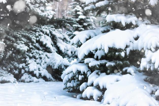 Зимняя ель снег