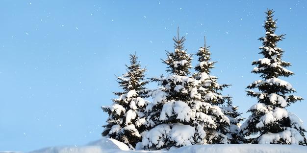 雪の中の冬のモミの木