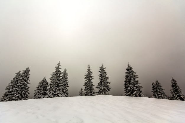 Winter foggy landscape with snow covered pine trees